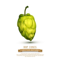 hop cone isolated on white background vector image vector image