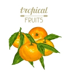 Background with mandarins Tropical fruits and vector image