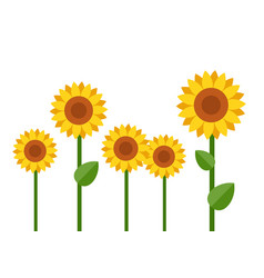 blooming sunflowers flat isolated vector image