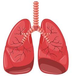 Lung diagram of pneumonia vector image