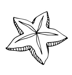 Simple sea starfish echinoderm vector