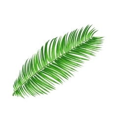 Full fresh leaf of sago palm tree vector image vector image