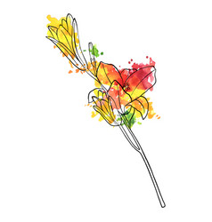 Drawing lily flower vector