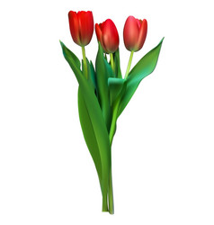Realistic colorful tulips vector