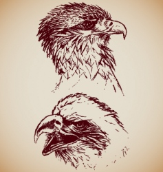 eagles vector image