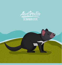 australia tasmanian devil poster with outdoor vector image