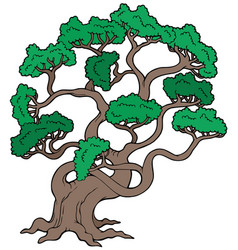 Big pine tree vector