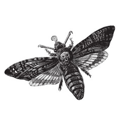 Death head moth vintage vector