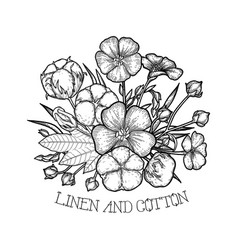 graphic linen and cotton design vector image