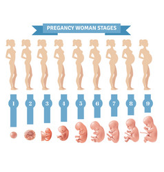 Pregnancy woman stages vector