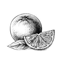 slice and whole orange vector image