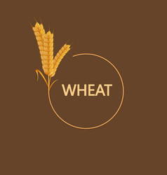 modern wheat background vector image