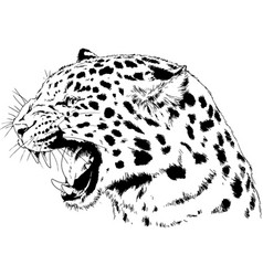 snarling face a leopard painted hand vector image