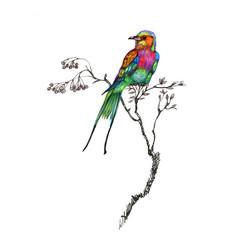 watercolor drawing bird artistic painting vector image