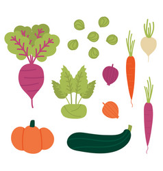 Set collection of fresh autumn fall vegetables vector