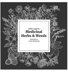 Square banner with chalk of medicinal herbs and vector