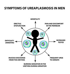 symptoms of ureaplasmosis in men ureaplasma vector image