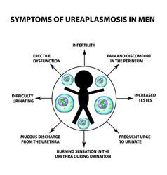 Symptoms ureaplasmosis in men ureaplasma vector