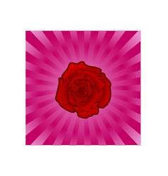 rose backround vector image