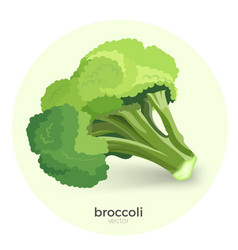broccoli green plant isolated vector image vector image