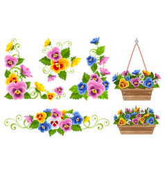 floral design elements set with pansy flowers vector image