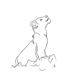 lion cub sitting lines vector image