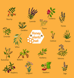 Nectar sources for honey bees vector