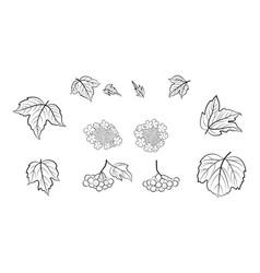 viburnum set pictograms vector image