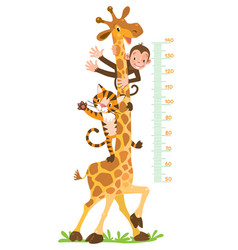 giraffe monkey tiger meter wall or height chart vector image vector image