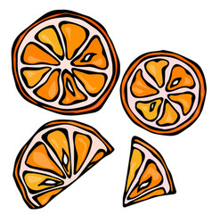 collection of orange slices isolated on white vector image