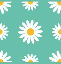 big white daisy chamomile cute flower plant vector image