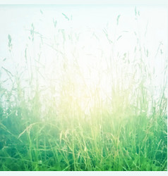 retro grass poster vector image