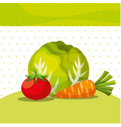 vegetables fresh organic healthy lettuce carrot vector image
