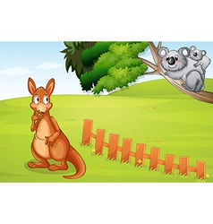 Kangaroo and koalas vector