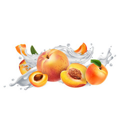 Apricots and peaches in a milk or yogurt splash vector
