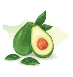 Avocado green fresh vector