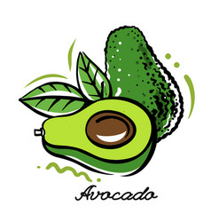 Bright avocado with leaves in outline vector