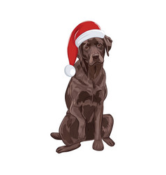 chocolate labrador in santa hat sitting and vector image