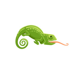 cute small green chameleon with open mouth vector image