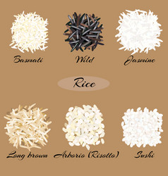 Different types rice vector