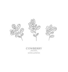 Hand drawn cowberry set vector
