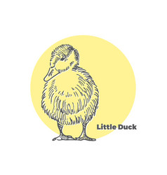 Hand drawn sketch of little cute duck with vector
