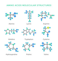 Molecular structures of amino acids isolated on vector