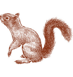 Nimble squirrel vector