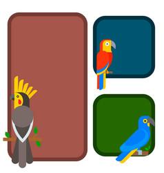 parrots birds breed species animal flayer brochure vector image