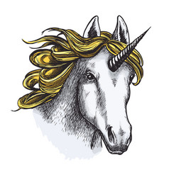 Unicorn isolated sketch with head of magic animal vector