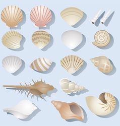 Sea Shell Objects Set vector image
