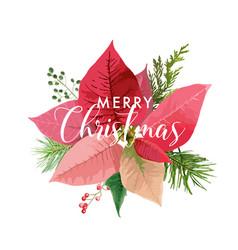 christmas winter poinsettia flower card vector image