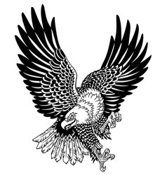 American whitehead bald eagle in flight vector