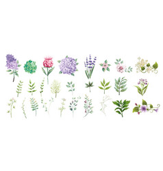 Set collection green leaves and flower watercolor vector